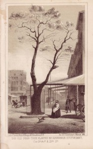 pear-tree-1861